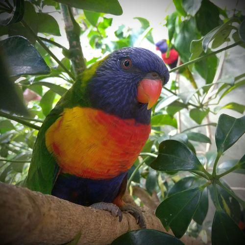 birdie Rainbow