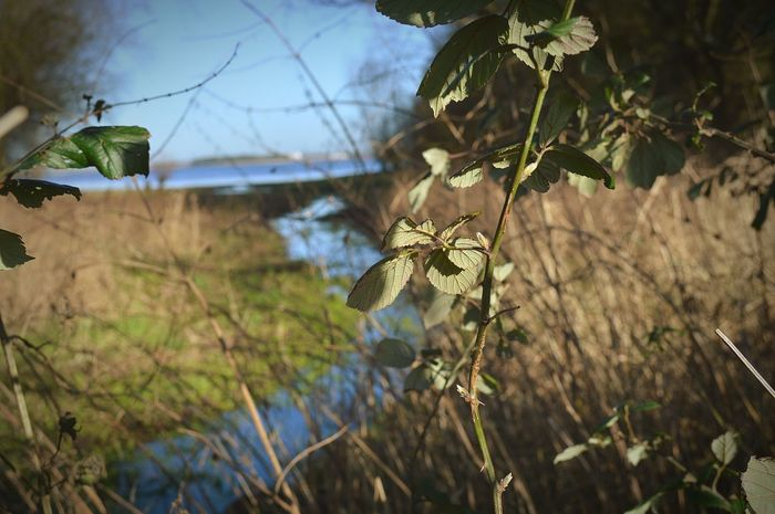 Looking Through Overgrown Leaves Long Grass Winter Leaves Winter Time Reservoir Stream Lake Lake View Blue Water Blue Sky Sunny Day Nature Reserve Nature Nature Photography EyeEm Nature Lover United Kingdom Nikon D3200