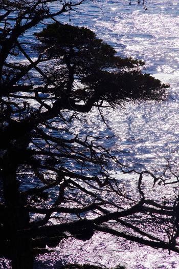 Glares Ocean Pine Trees Reflection Selfie Sunshine Tree Tree Trunk Water Seventeen Miles California Feel The Journey