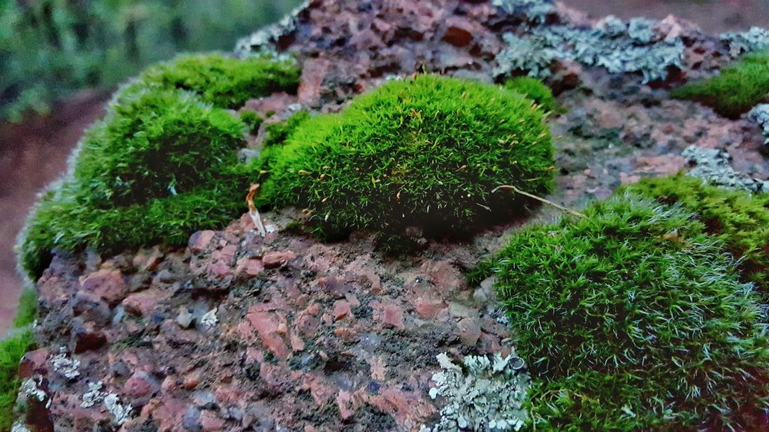 Moss in the Rocky Mountains. Moss Nature Close-up Beauty In Nature Plant Life Outdoors Rocky Mountains Epic Shot Photography Green Color Plant Color Palette Follow4follow Followplease Extreme Close-up Botany Followme Greatday