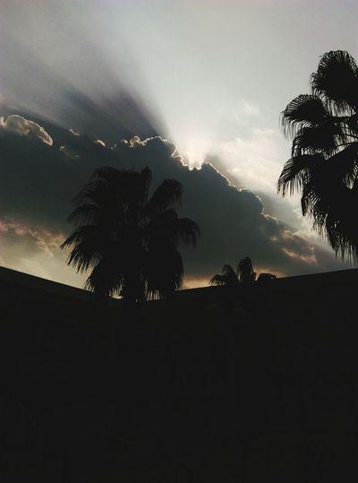 Tree Palm Tree Silhouette Sky No People Night Outdoors Nature City Astronomy