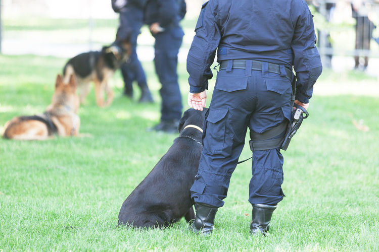 A police officer on duty with K9 dog Detection K-9 On Duty Police Dog Police Officer Policeman Trainer Uniform Canine Detection Dog Dog Domestic Animals Guard K9 K9 Dogs Law Enforcement Narcotics Pets Protecting Protection Real People Sniffing Dog Trained Dog Training Vigilance