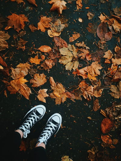 knocknagoney realness Low Section Leaf Autumn Shoe Standing Canvas Shoe Human Leg Pair High Angle View Close-up Shoelace Leaves Fall Dried Wilted Dry Leaf Vein Maple Change Fallen