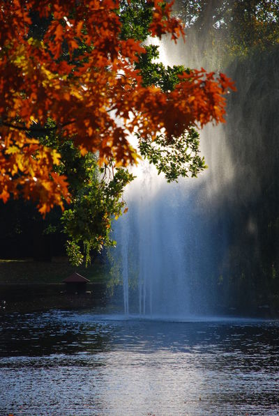 EyeEm Best Shots EyeEm Nature Lover Fountain Tree Foliage Leaves Autumn Springbrunnen Fontäne Laub Herbst Baum Park Water Lake Wiesbaden Park Ast Äste Branch Branches Colors Farben Herbstlaub Herbstfarben Herbstfärbung Oktober October Tree Water Nature Beauty In Nature Motion Spraying No People Autumn Tranquility The Great Outdoors - 2018 EyeEm Awards