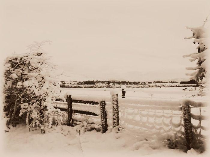 Winter in Friesland Blackandwhitephotography