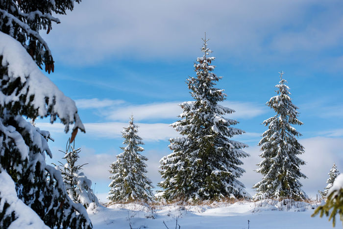 Winter panorama with snow covered trees. Christmas concept Christmas Fairy Winter Mountains Winter Vacation Winter Landscape Wintertime Xmas Beauty In Nature Cold Temperature Day Fir Trees Idyllic Nature No People Outdoors Scenery Scenics Snow Snow Covered Landscape Snow Covered Trees Winter Winter Holidays Winter Magic Winter Trees Winter Wonderland