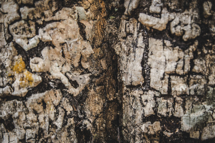 Abstract Abundance Backgrounds Bark Bark Texture Bark Texture Background Beauty In Nature Close-up Day Detail Elevated View Full Frame Growth Natural Pattern Nature No People Outdoors Rock Rock - Object Rock Formation Rough Stone - Object Textured  Tranquility