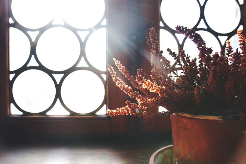 Still Life Window Indoors  Flower Close-up No People Day Windowboard Sunlight