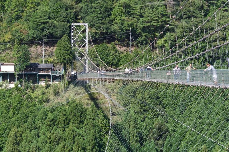 Suspension Bridge Tanize Nara Japan Green Color Outdoors Day Nature Tree Nikon D500 Nikkor 80-400
