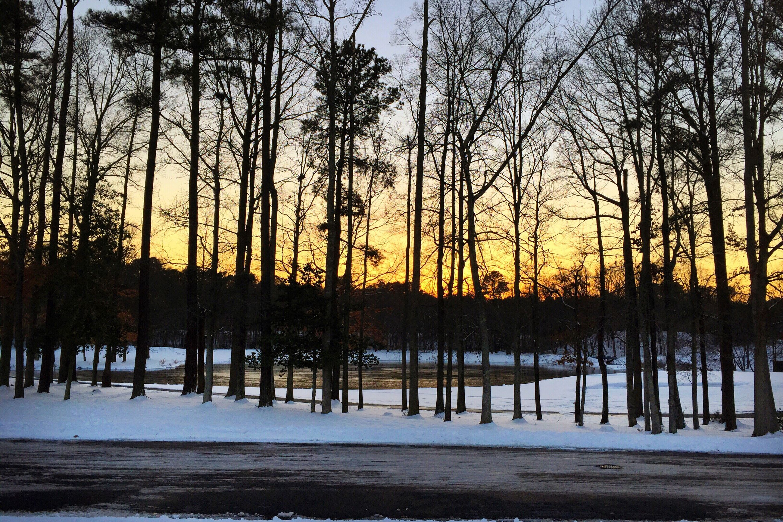 sunset, tree, snow, nature, winter, cold temperature, beauty in nature, no people, outdoors, tranquility, scenics, sky, sun, landscape, day