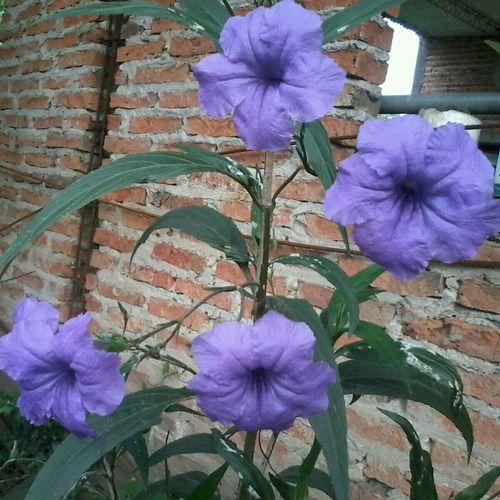 hermosas flores!!!