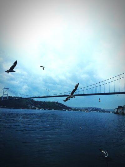 Boğaz Boğaz Köprüsü Fatih Sultan Mehmet Koprusu Sea Likeforlike Like4like Turkey Istanbulturkiye Istanbuldayasam Istanbul - Bosphorus Istanbul Turkey Water Breakfast Love ♥