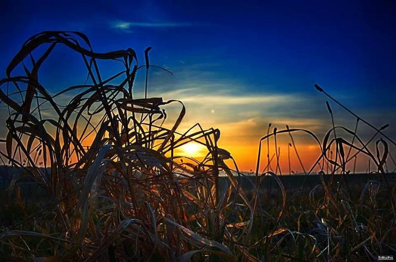 HDR Sunset Nature Saxony
