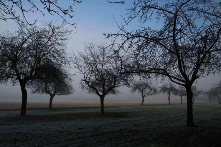 Beauty In Nature Blue Cold Cold Days Cold Temperature Fog Foggy Frost Landscape Nature No People Orchard Outdoors Sky Tree Tree Trees Winter