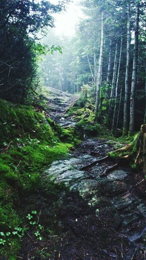 Nature On Your Doorstep No Location Needed Naturelovers Hiking Trail Nature Creative Light And Shadow EyeEm Best Shots Edge Of The World