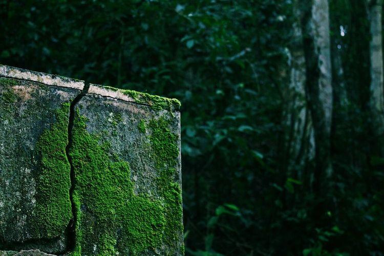 Close-up of moss on tree