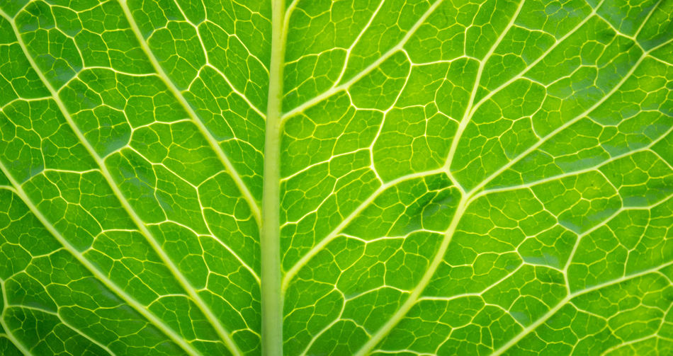 Abstract Agriculture Back Background Botanical Botany Bright Closeup Color Detail Diagonal Environment Foliage Fresh Garden Green Growth Leaf Life LINE Nature Organic Pattern Plant Spring Summer Texture Vegetable