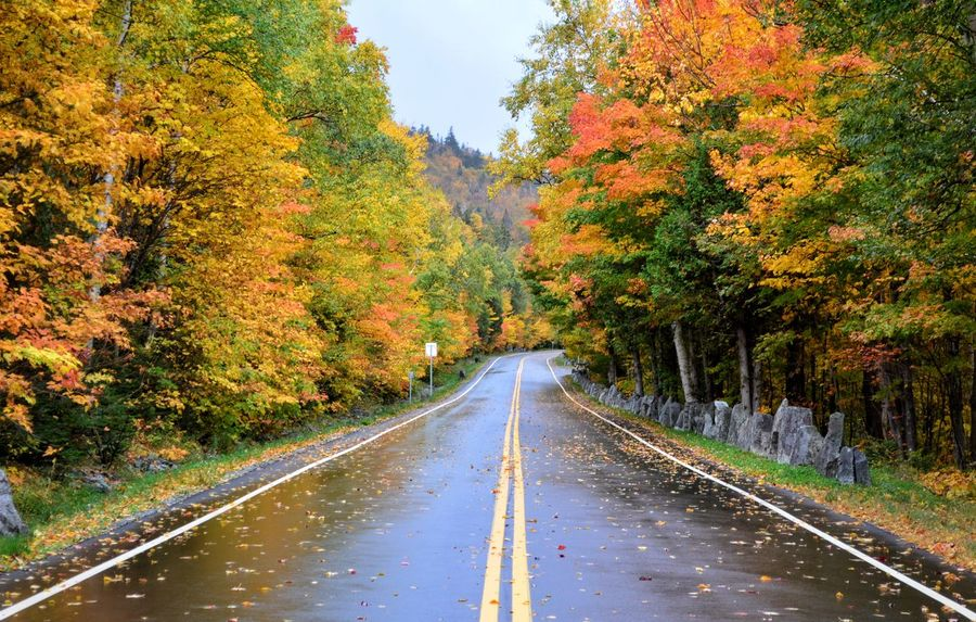 Scenic Road Tree Road Autumn The Way Forward Season  Change Transportation Tranquil Scene Tranquility Empty Long Beauty In Nature Growth Country Road Scenics Nature Diminishing Perspective Double Yellow Line Day Outdoors Fall Foliage Fall Beauty White Face Mountain New York