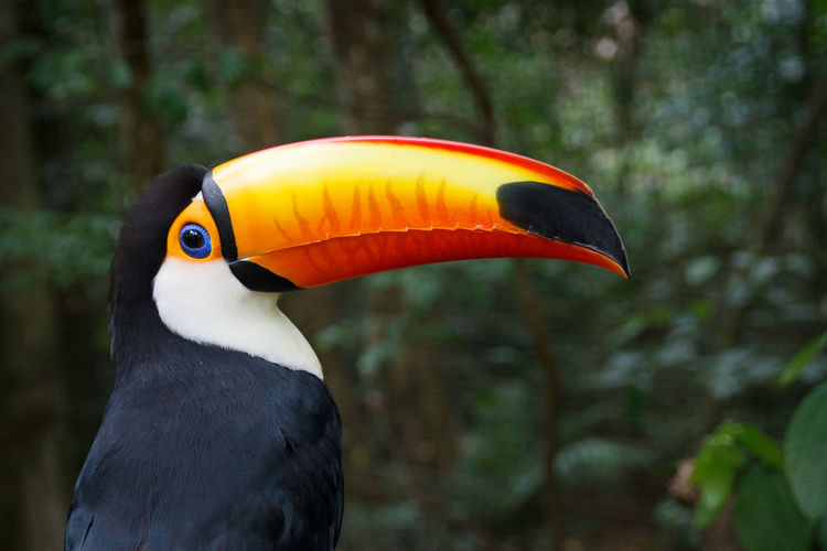 Close-up of hornbill perching against plants
