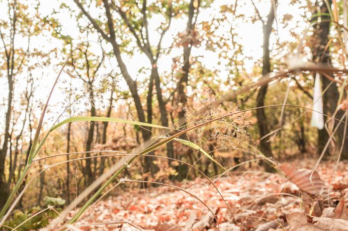 Autumn Chunggyesan Mountain