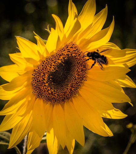 @SaNnY318 In Thoughts With You Genießen Beautiful Day Day Beauty In Nature Abschalten The Week on EyeEm Flower Head Flower Yellow Black-eyed Susan Sunflower Petal Close-up Sky Plant Blossom Focus
