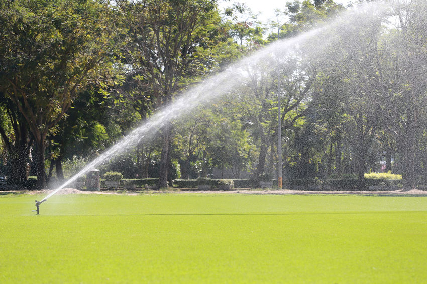 Sprinkler in Watering green lawn of golf courses in the morning. Sprinkler In Grass Sprinklers Watering Plants Beauty In Nature Day Fountain Garden Hose Gardening Grass Green Color Growth Irrigation Equipment Lawn Motion Nature No People Outdoors Plant Sport Spraying Sprinkler Sprinkler System Tree Water Watering