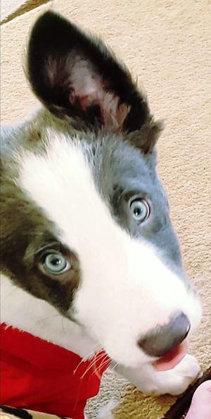 blue eyed boy.