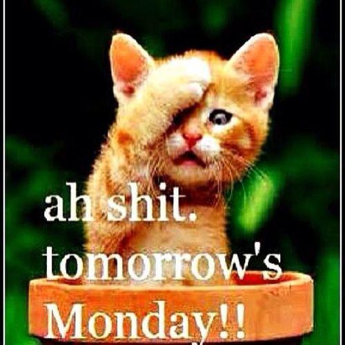 NoCaptionNeeded Shortworkweek Ihatemondays Mondaymorningblues