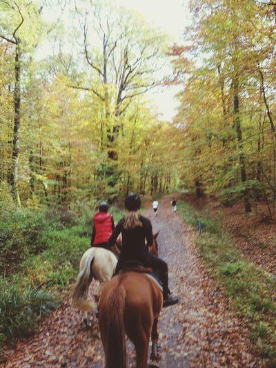 Qu'est-ce que ça fait du bien de faire une balade dans la forêt ?????? Enjoying Life