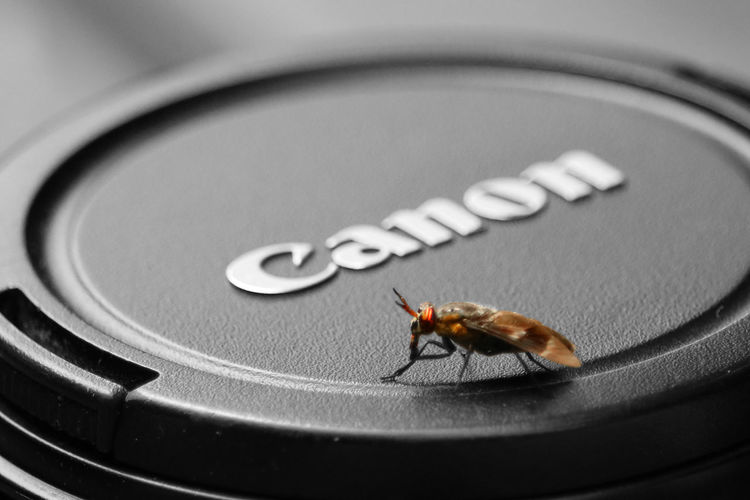 Bite Bug Cap Fly Horsefly Horsefly And Lens Insect Lens Lenscap