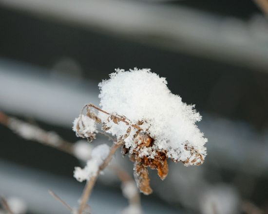 Macro Macro Beauty January Showcase: January Cold Winter ❄⛄ Snow Covered Branch Winter 2016 Nature Photography Winter_collection Wintertime Winter Season Winter Frosty Days Frosty Day Winter Forest Snow Covered