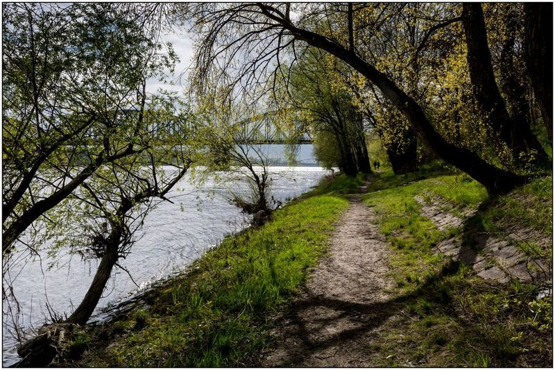 Vistula River Light And Shadows Branch Riverside Water Reflections Springtime Nikonphotography Tsf Nikon D7100 D7100 Nikon Trees Sigma 18-35 F1.8 Silence Moment Photowalk Outdoors Landscape River