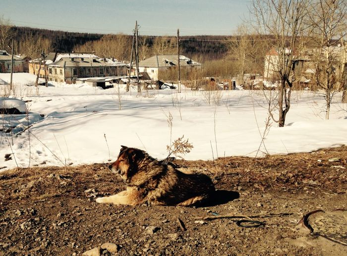 Stray dog relaxing by snow covered landscape