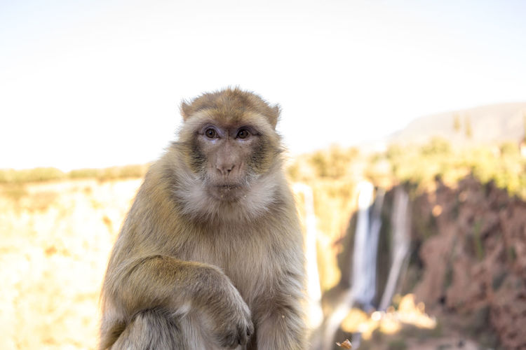 Close-up of monkey sitting on rock against sky
