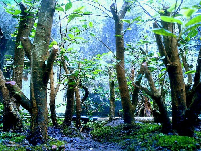 Flora Indonesian Street (Mobile) Photographie Enchanted Path Woods Forest Like4like