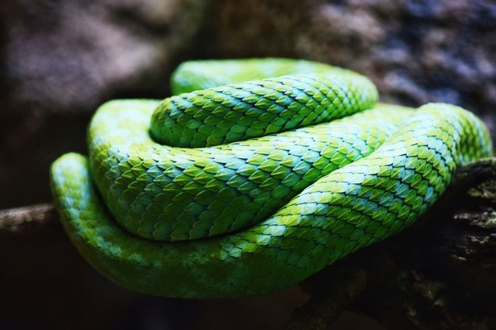 Animal Wildlife Green Color Close-up No People Reptile Day Outdoors Nature Animal Themes