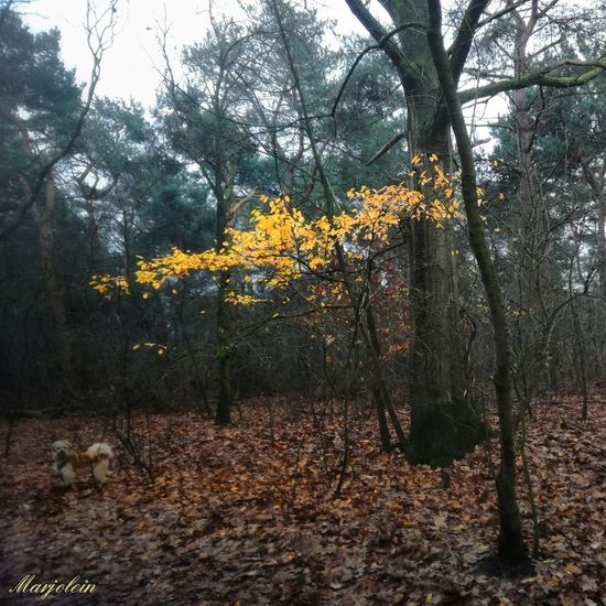 Tree Growth Nature Beauty In Nature Outdoors Tranquility Day No People Branch Tranquil Scene Autumn Yellow Bare Tree Tree Trunk Scenics Sky Flower Freshness EyeEm Best Shots Moodyphotography EyeEm Nature Lover Beauty In Nature Holland❤ Forestwalk Hiking_walking