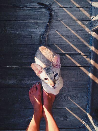 Floortraits EyeEm Animal Lover Cat Cute Pets