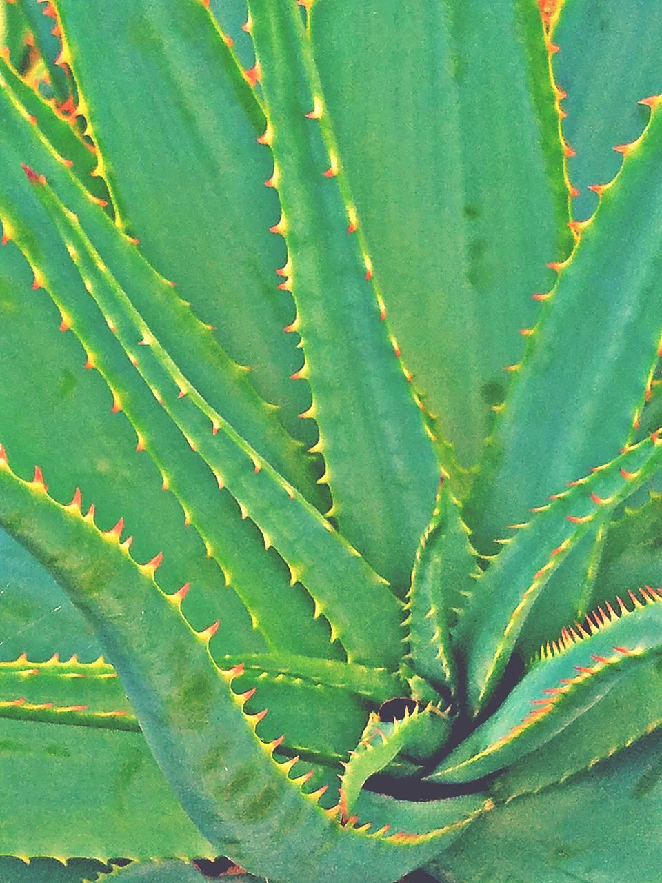 leaf, green color, growth, plant, nature, aloe, aloe vera plant, no people, close-up, alternative medicine, herbal medicine, beauty in nature, day, outdoors, freshness