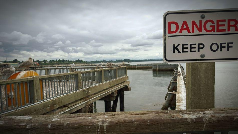 Danger! Danger Sign Water Pier Photography Birds Seagulls Harbor PNW Pacific Northwest  JessCarrieA