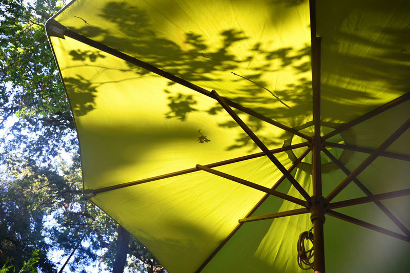 Plant Yellow Tree Low Angle View Nature Sky Day Outdoors Sunlight No People Protection Security Pattern Growth Beauty In Nature Umbrella Safety Close-up Cloud - Sky Directly Below