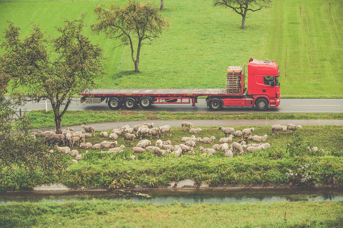 Agriculture Beauty In Nature Day Flock Of Sheeps Grass Grassy Green Green Color Growth Land Vehicle Landscape Mode Of Transport Nature Outdoors Plant Red Rural Scene Souther Germany Swabian Alb Tranquil Scene Tranquility Transportation Travel Tree Truck