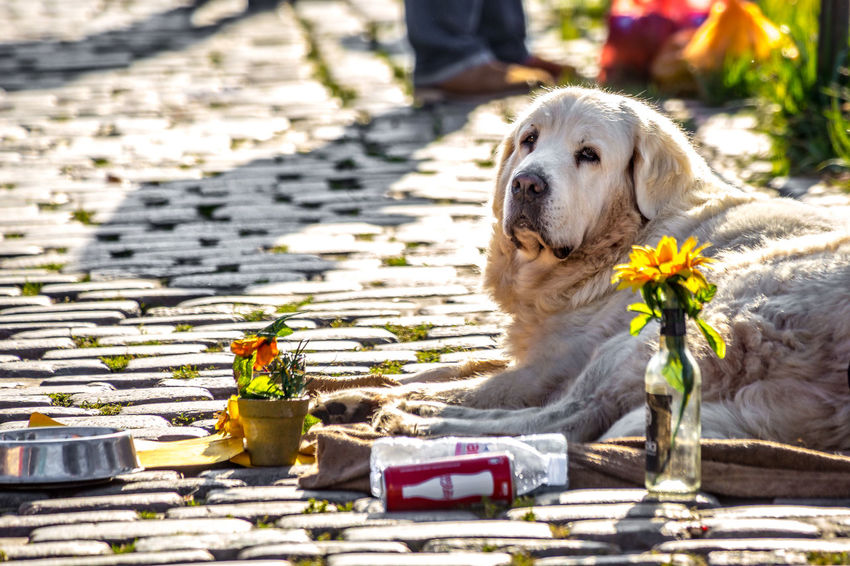 Dog Dogs On The Street Mammal No People One Animal Pets Relaxation Relaxing Streetphotography