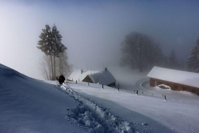 People Walking On Snow In Foggy Weather