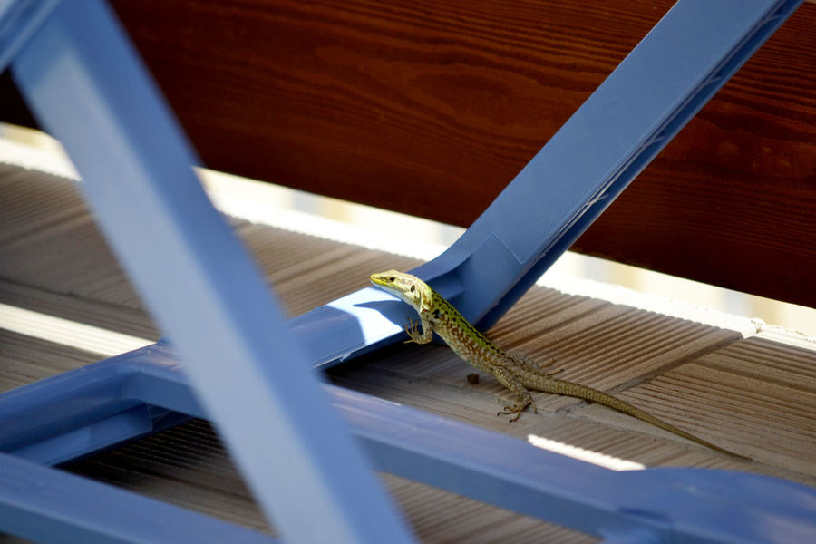 Blue Table Floor Hot Light And Shadow Lizard Sicily Sunshine Sunshine Day