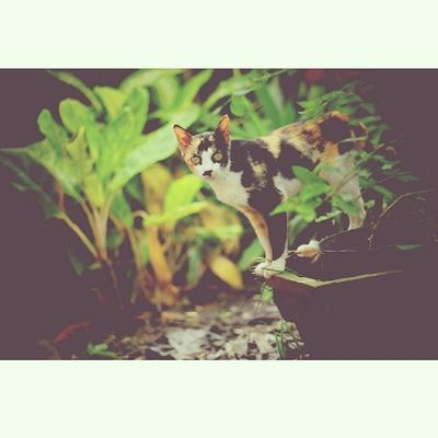Cat Photography Tembilahan Inhil indonesia instalike