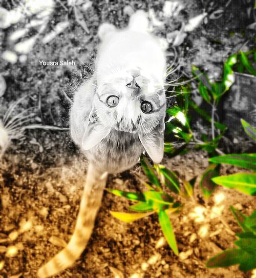 Cat eyes ❤ Cat Cat Face Cat Eyes Cats Of EyeEm Cat Lovers Cat Looking At The Camera Color Selective One Animal Animal Theme Animal Backgrounds ❤ No People Portrait Close-up Day Outdoors Nature
