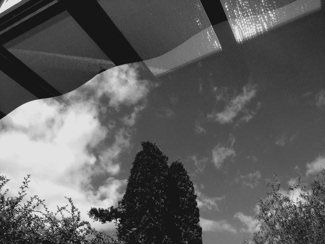 Sky And Tree Collection Land Escape The Human Condition Dark Light