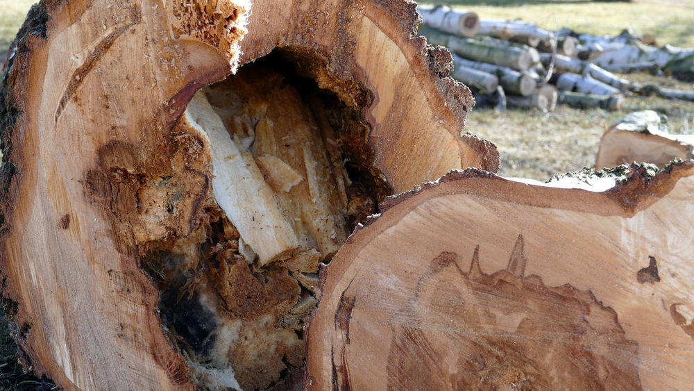 Brown Gefällter Baum Holzhaufen  Old Textured  Thüringer Wald Totholz Woods