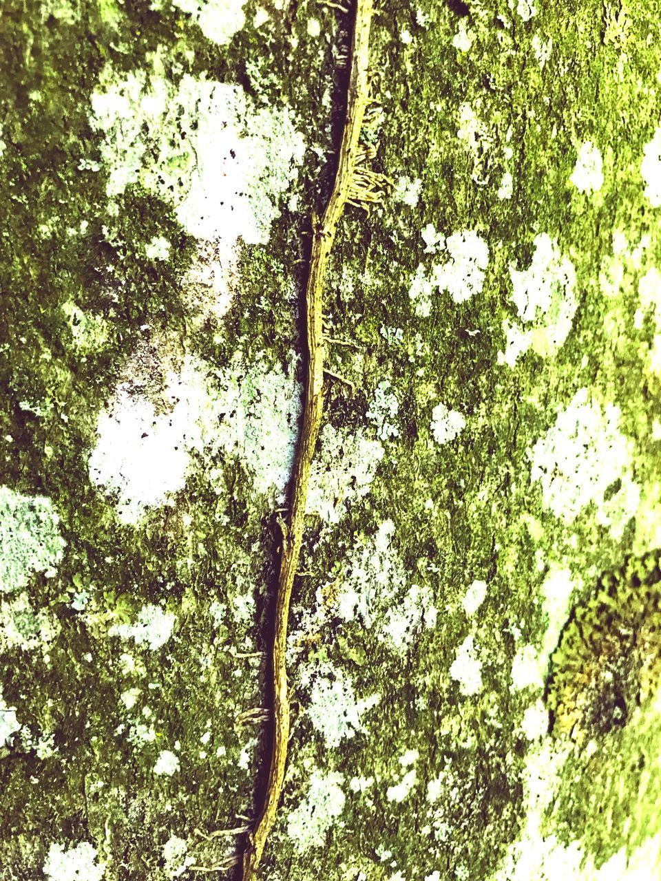 tree, plant, growth, no people, nature, low angle view, day, beauty in nature, tree trunk, trunk, outdoors, green color, full frame, tranquility, branch, forest, plant part, backgrounds, leaf, close-up, directly below, tree canopy